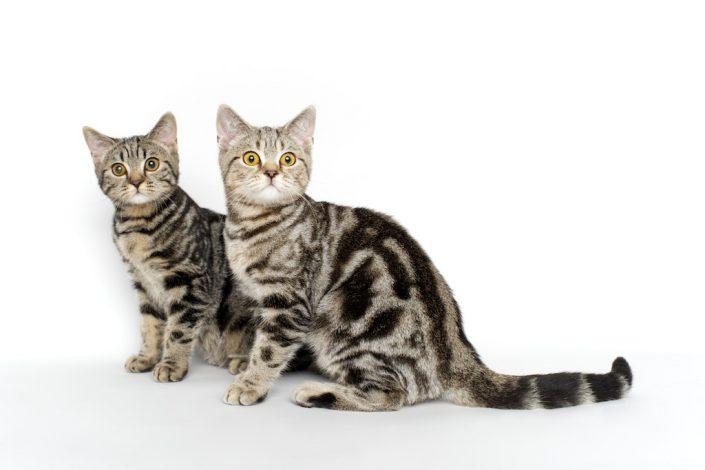 kačių fotografavimas reklamai