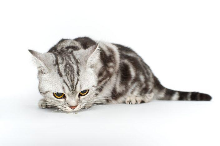 kačių fotografavimas
